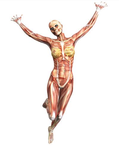diastsi dei muscoli retti addominali
